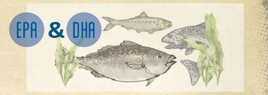 Die marinen Omega-3-Fettsäuren EPA und DHA sind vorrangig in fettem Fisch, Krill und Algen enthalten